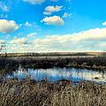 Pond Hole by Art Dingo