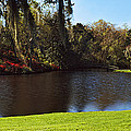 Pond In A Garden, Middleton Place by Panoramic Images