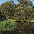 Pond In Park by View Factor Images