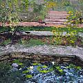 Pond In The English Walled Gardens by Mary Haas