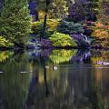 Pond In The Park Oil Paint  2721gop   by Karen Celella