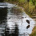 Pond Life by Linda Kerkau