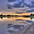 Pond Life by Scott Wood