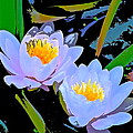 Pond Lily 17 by Pamela Cooper