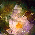 Pond Lily 23 by Pamela Cooper