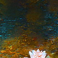 Pond Lily 27 by Pamela Cooper