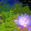 Pond Lily 29 by Pamela Cooper
