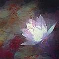 Pond Lily 32 by Pamela Cooper