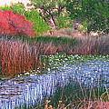Pond by Marilyn Diaz