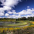 Pond by Mark Robert Bein