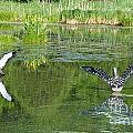Pond Pairs Dancing by Susan Herber