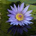 Pond Purple  by Grace Dillon