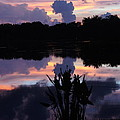 Pond Reflection by Michael Noterman