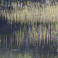 Pond Reflections by Alan L Graham