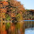 Pond Reflections by Francie Davis