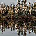 Pond Reflections by Paul Freidlund