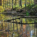 Pond Reflects by Frozen in Time Fine Art Photography
