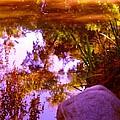 Pond Reflextions by Amy Vangsgard