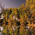 Pond by Ron Sanford