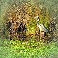 Pond Wildlife by Joyce Dickens