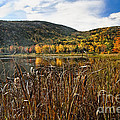 Pond With Autumn Foliage  by George Oze