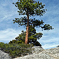 Ponderosa Pine And Granite Boulders by Jeff Goulden