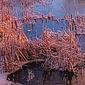 Ponds Edge by John Malone
