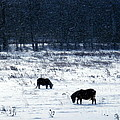 Ponies In The Snow by Christian Mattison