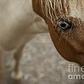 Pony by Audrey Wilkie