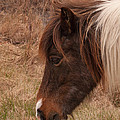 Pony Head by Scott Bush
