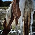 Pony Tail by Robert McCubbin
