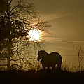 Pony watching the sun rise