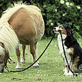 Pony With Lead Rope Held By Sitting Dog by John Daniels