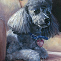 Poodle by Nicole Troup