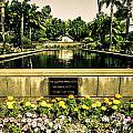Pool At Nixon Library  by AR Harrington Photography