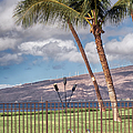 Poolside In Maui by Trever Miller