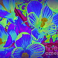 Pop Art Blue Crocuses by Dora Sofia Caputo Photographic Design and Fine Art