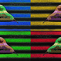 Pop Art Pears by David Pantuso