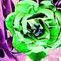 Pop Petals by Ed Weidman
