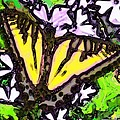 Popart Butterfly Redux by Jeffrey Todd Moore