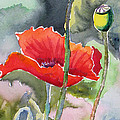 Poppies 3 by Mohamed Hirji