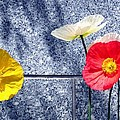 Poppies And Granite by Will Borden