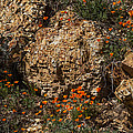 Poppies And  Rocks by Roger Mullenhour