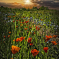 Poppies Art by Debra and Dave Vanderlaan