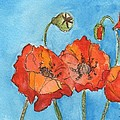 Poppies by Bev Veals