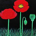Poppies by Catherine Velardo
