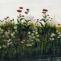 Poppies, Daisies And Thistles by Andrew Nicholl