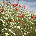 Poppies Et Al Iv by Jacqueline Moore