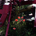 Poppies Growing Amongst Farm Machinery In A Farmyard Near Pocklington Yorkshire Wolds East Yorkshire by Michael Walters