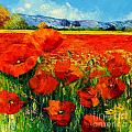 Poppies by MGL Meiklejohn Graphics Licensing